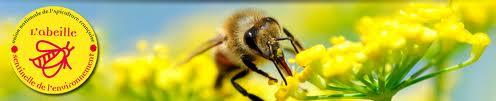 abeille sentinelle